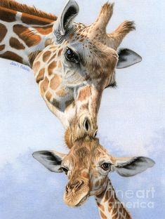Too cute and, of course, well-done: #Love from Above by Sarah Batalka #AnimalArt #giraffes Giraffe Drawing, Giraffe Painting, Giraffe Art, Giraffe Room, Giraffe Head, Animal Paintings, Animal Drawings, Art Drawings, Pencil Drawings