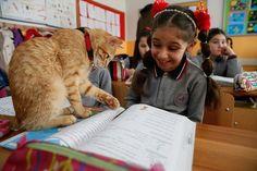 Η τάξη που υιοθέτησε έναν γάτο