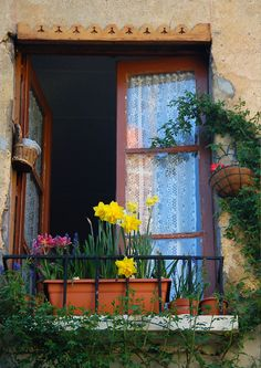 Windowphp has some tips and advice on choosing the right windows for your home.