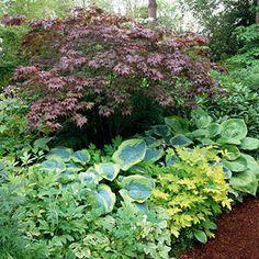 shade garden idea, for under the Japanese maple