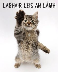 Labhair leis an lámh (talk to the hand)! Class Rules Poster, Gaelic Words, Irish Language, Scottish Gaelic, European Languages, Cute Baby Animals, Cat Lady, Cute Babies, Celtic