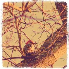 Woodpecker pecking / staccato morning greeting / I'll not soon forget.