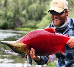 Alaska Fishing Pics (@AKFishingPics) | Twitter
