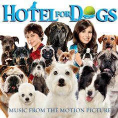 18 Best Hotel For Dogs Images Dog Boarding Kennels Dog Hotel
