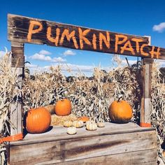 🌟Tante S!fr@ loves this📌🌟Autumn🍁Ever🍂After Vintage Halloween, Fall Halloween, Vintage Fall, October Country, Season Of The Witch, Autumn Cozy, Autumn Aesthetic, Happy Fall Y'all, Best Seasons