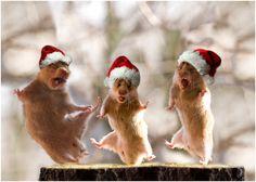 Funny animals at Christmas Christmas Animals, Christmas Humor, Christmas And New Year, Cute Baby Animals, Funny Animals, Funny Animal Quotes, Montage Photo, Photocollage, House Mouse