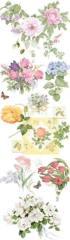 The Portfolio of Ellen Blonder Botanical Illustration, Botanical Prints, Watercolor Illustration, Watercolor Flowers, Watercolor Paintings, Academic Drawing, Arte Floral, Bunt, Flower Art