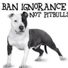 True! People say Pit Bulls are mean and bad..... who's the mean one talking bad about them...?! Oh, right! It's you!!