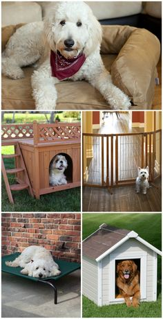 With the right dog house or pet bed, you can maximize your pup's comfort without compromising your home's style. Find the perfect match for you, your house, and your favorite four-legged friend at hayneedle.com.