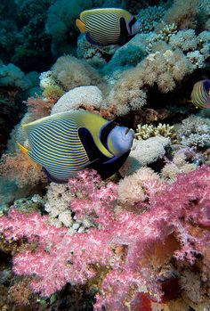 1079 best passion images on pinterest in 2018 marine life ocean
