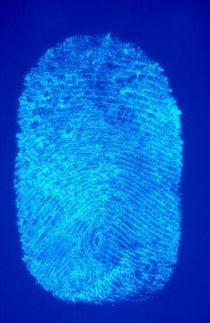 DNA Fingerprinting Lesson Plan - for Biology classes