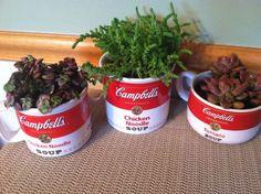 Campbell Soup Succulents