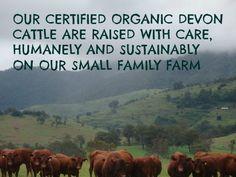 We love our Certified Organic (Biodynamic) Devon Cattle.