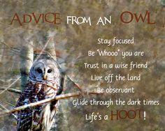 Advice from an Owl
