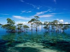 havelock island for honeymoon