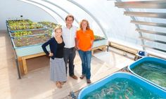 """A collective """"ooh"""" went up as the condensation cleared from a new 12 x 7 metre structure to reveal the UK's first aquaponic solar greenhouse, in the perhaps unlikely environs of Kate Humble's 117-acre ex-council farm in Monmouthshire, Wales."""