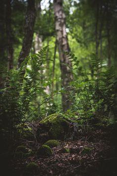 nature | life on earth - beautiful green
