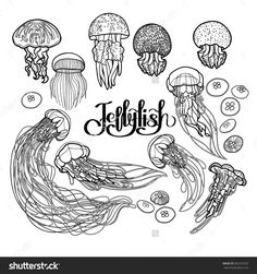 Jellyfish Drawn In Line Art Style. Vector Ocean Animals In Black And White Colors. Coloring Book Page Design For Adults And Kids - 360237635 : Shutterstock