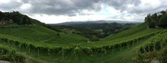 View from Tement winery in Austria (Steiermark)