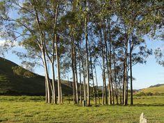 Bosque. Sul de Minas, Brasil.