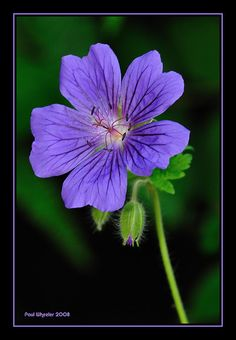 Delicate Flowers - Yahoo Image Search Results