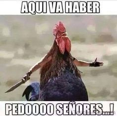 Funny Animal Pictures Of The Day – 27 Pics Funny Animal Clips, Funny Animal Pictures, Funny Animals, Cute Animals, 3d Pictures, Photos, Mexican Humor, Mexican Quotes, Chicken Humor