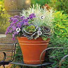 best window box plants - Google Search