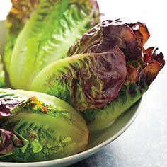 Mini Romaine Blend Lettuce Seeds