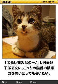 おもしろネコちゃん, キュートな猫, 愉快な動物, 動物・ペット, 猫ネタ, かわいい猫, 犬・猫, コメディー, キスシーンの名場面集