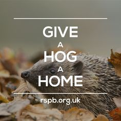 Build your very own cosy hedgehog home, and encourage them to rest, hibernate and raise their hoglets in safety.