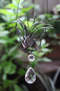 SKIP気分 | ワイヤークラフト Cool Plants, Air Plants, Indoor Plants, Air Plant Display, Plant Decor, Deco Floral, Diy Planters, Wire Crafts, Wire Art