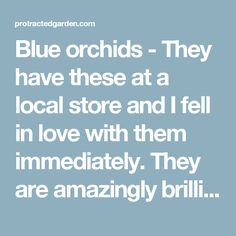 Blue orchids - They have these at a local store and I fell in love with them immediately. They are amazingly brilliant in color, and a stunning to look at.   protractedgarden