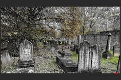 https://flic.kr/p/ByQscr | Autumn at the Jewish cemetery in Ferrara | © This photo is copyrighted by the photographer and may not be used without permission.