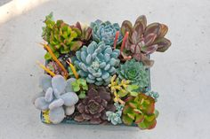 Succulent arrangement in blue square by iDreamOfSucculents on Etsy
