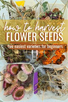 Easy Annual Flowers for the Beginner Seed Saver. One of the easiest and best ways to save money gardening is by saving seeds. I'll show you the easiest cut flowers to harvest seeds from the fall, so you can be frugal in the Spring. It's so easy even a be Cut Flower Garden, Flower Farm, Flower Gardening, Cut Garden, Spring Garden, Gardening For Beginners, Gardening Tips, Kitchen Gardening, Growing Flowers