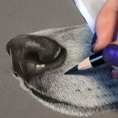 how to draw hands Pencil Drawings Of Animals, Animal Sketches, Art Drawings Sketches, Cool Drawings, Dog Sketches, Dog Pencil Drawing, Colored Pencil Artwork, Color Pencil Art, Colored Pencil Portrait