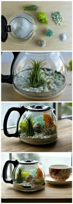 Plants and Coffee // Let's make a coffee pot Terrarium! — A Charming Project Plants and coffee // Let's make a coffee pot terrarium Garden Terrarium, Succulents Garden, Garden Plants, House Plants, Planting Flowers, Planting Plants, Succulent Terrarium, Herb Garden, Air Plants