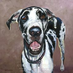 """""""Abby,"""" Harlequin Great Dane pet portrait oil painting on 12"""" x 12"""" gallery wrap edge canvas."""