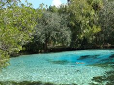 10 Jaw Dropping Springs of Florida you have to visit