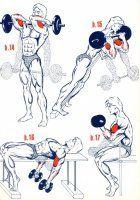 Biceps3