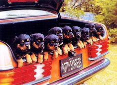 My kinda luggage <3 #rottweilers