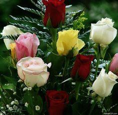 gif rózsák,gif lila tulipánok,gif rózsák,csodás,..igazán szép, hűsítő látvány...,Esti csokor...gif,gif virágok,gif rózsák,gif virágok,Szeretettel neked barátom!, - klementinagidro Blogja -   Ágai Ágnes versei ,  Búcsúzás,  Buddha idézetek,  Bölcs tanácsok  ,  Embernek lenni ,  Erdély,  Fabulák,  Különleges házak  ,  Lélekmorzsák I.,  Virágkoszorúk,  Vörösmarty Mihály versei,  Zenéről, A Magyar Kultúra Napja-Jan.22, Anthony de Mello, Anyanyelvről-Haza-Szűlőfölről, Arany János  művei…