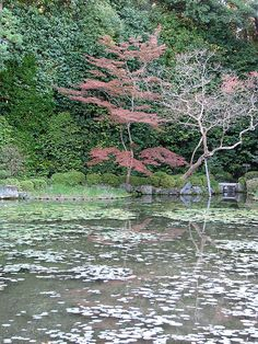 The garden's most striking feature are its many weeping cherry trees, which bloom a few days later than most other cherry trees, making the garden one of the best cherry blossom spots in Kyoto around the tail end of the season, which is usually around mid April.