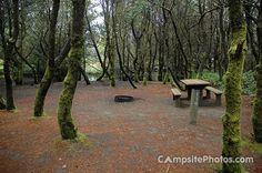 Grayland Beach State Park - Camp Site #110 (Primitive)