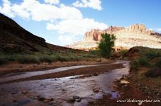 Twelve things not to miss at Capitol Reef National Park. My list includes amazing hikes, viewpoints, and historical areas in this lesser-known area of Utah
