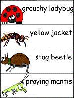 The Grouchy Ladybug Word Wall Words Education And Literacy, Preschool Literacy, Preschool Lessons, Kindergarten, Preschool Books, Preschool Themes, Science Classroom, Classroom Ideas, Retelling Activities