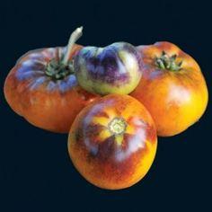 Orange Fleshed Purple Smudge tomato -- started in my aerogarden indoors 24 Feb 2012