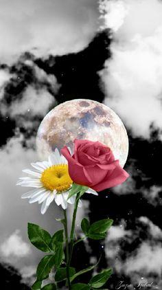 Virágok az éjben...