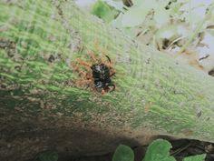 Ant vs Bug