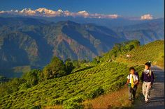 My INDIA Wishlist | Top 5 Cities in India I'd love to go to and why! #Darjeeling
